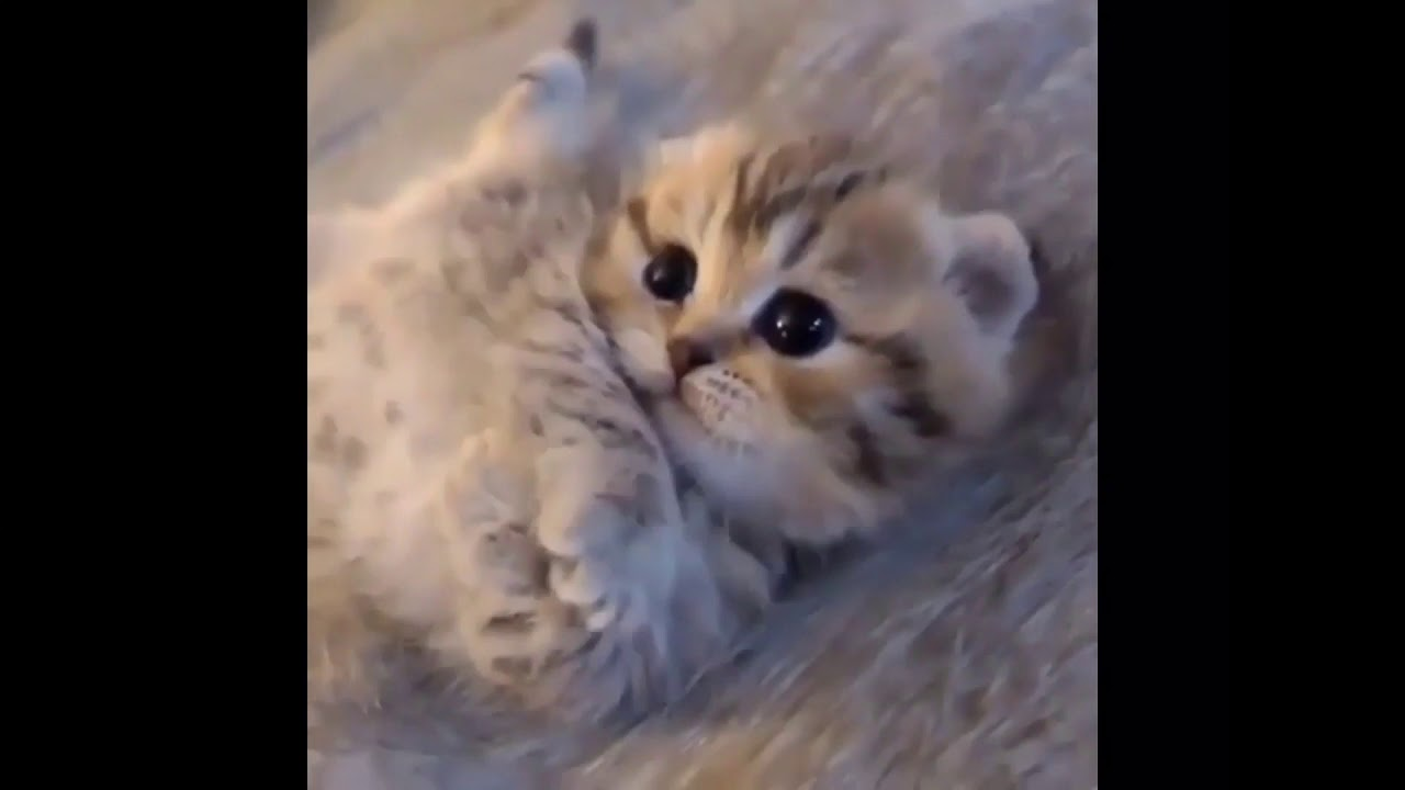 CUTE BABY ANIMALS/SMALL BEAUTIFUL KITTENS