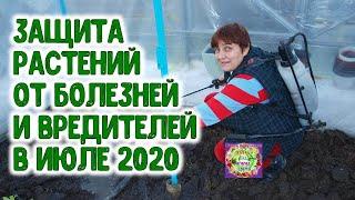 ЗАЩИТА РАСТЕНИЙ ОТ БОЛЕЗНЕЙ И ВРЕДИТЕЛЕЙ В ИЮЛЕ 2020 ГОДА