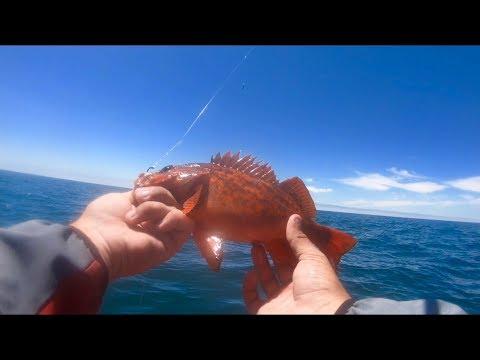 La Jolla Kayak Fishing For Rockfish!