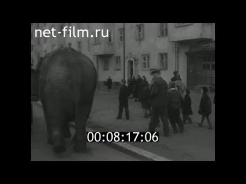 1960г. Калининград. зоопарк