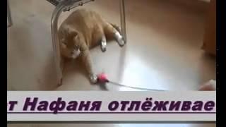 Гостиница для животных Золотая косточка Томск