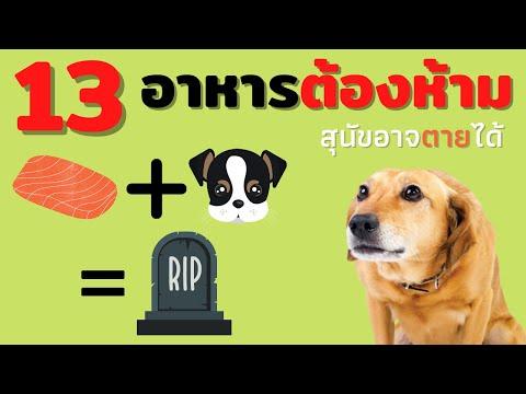 13 อาหารต้องห้ามสำหรับสุนัข หากกินแล้วอาจถึงตายที่คุณอาจไม่เคยรู้