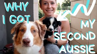 Watch this if you're thinking of getting another puppy!!!
