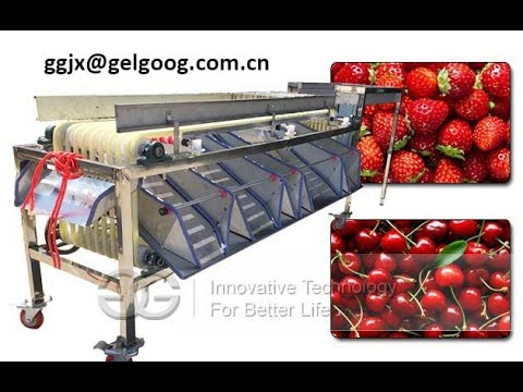 Walnut Sorting Machine|Walnut Grading Machine|Multi Purpose Fruit Size Grader