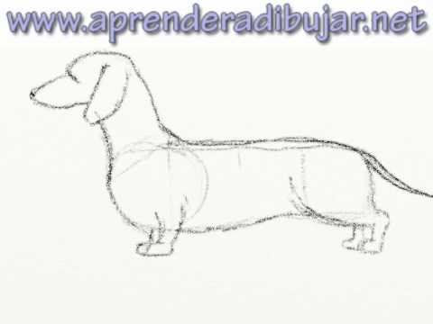 Cómo dibujar un perro salchicha paso a paso YouTube