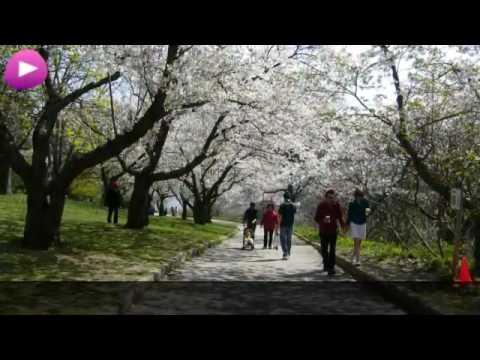Toronto Wikipedia travel guide video. Created by Stupeflix.com