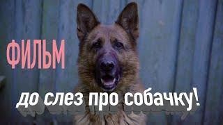 Фильм до слез о добрейшей собаки, которую хотят убить
