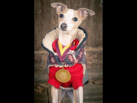 Lea - Italian Greyhound Puppy - 5 Weeks Residential Dog Training