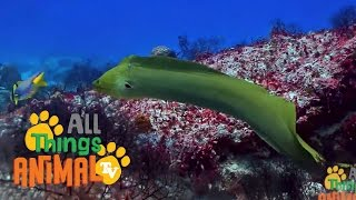* EELS *   Animals For Kids   All Things Animal TV YouTube Videos