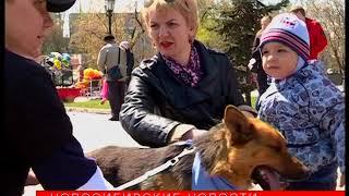 Новосибирцы погуляли в Первомайском сквере с бездомными собаками