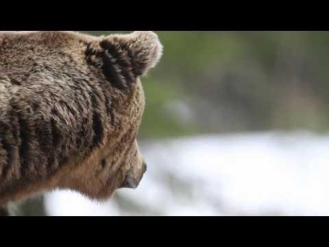 Wild December ¨ HD 1080¨