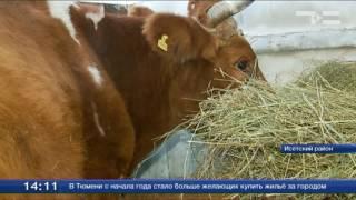 Борьба с лейкозом: к 2019 году на юге области не должно быть зараженных животных