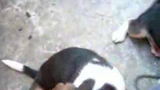 Jdr Beagle Part 2