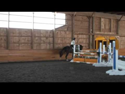 "Carricon over a few 4' fences / grid with a 4'6"" oxer -- For Sale"