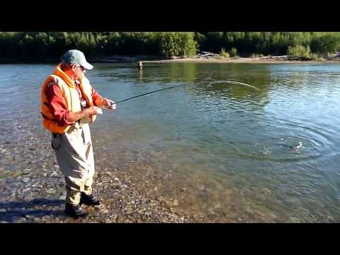 Fly fishing Russian Far East: Fresh Silver Salmon caught in the Yama river in autumn 2010