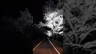 화개장터벚꽃야경