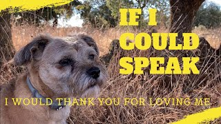 IF I COULD SPEAK  Love, loyalty and gratitude from a beautiful Border Terrier dog, called Barney.