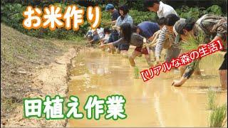 ゆいまーる!「田植え」昔ながらの田園風景の中で手作業【リアルな森の生活】【ForestLife】Make organically grown rice in INAHO-FARM「OKINAWA」