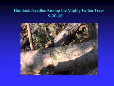 Update on OARDC/Secrest Arboretum Tornado Damage Part 2 of 2