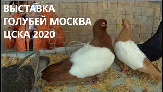 ВЫСТАВКА ГОЛУБЕЙ ЦСКА Москва 2020 ГОД
