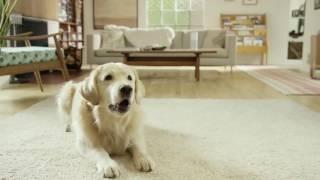 Amazon Alexa Moments: Petlexa (Amazon Echo Commercial) thumbnail