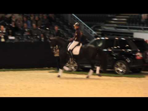 Edward Gal & Voice - Extended Trot