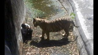 When Zoo Animals Attack Compilation part 2