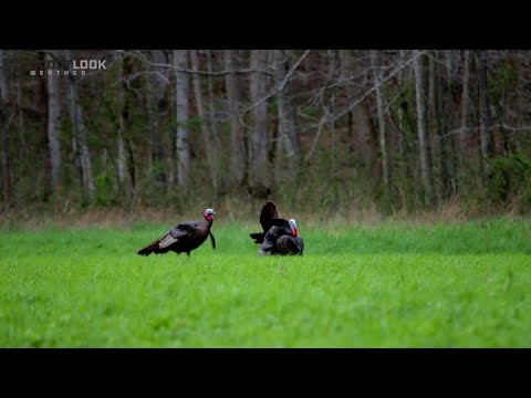 Cabela's Spring Thunder: Early-Season Turkey Hunting & Scouting Tips