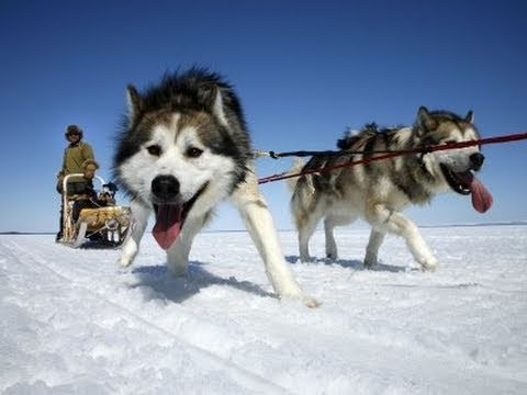 100 sled dogs slaughtered in Canada after post-Olympic tourist slump