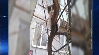 Тепло близко: ростовские коты прилетели