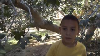 SINAI   Wadi Feiran   Summer 2011 Thumbnail