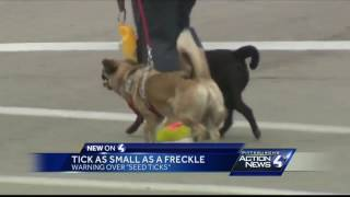 Warning over seed ticks: Ticks as small as a freckle