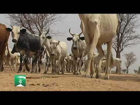 FARMERS MARKET: HERDSMEN, FARMERS CLASHES AND FOOD SECURITY