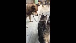 マムシ に 噛ま れ た 柴犬 ラッキー