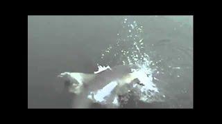 (2014.6.7) 釣り情報バラエティ 『ツリラブ』 出演:ガレッジセール川田広樹・つりビット