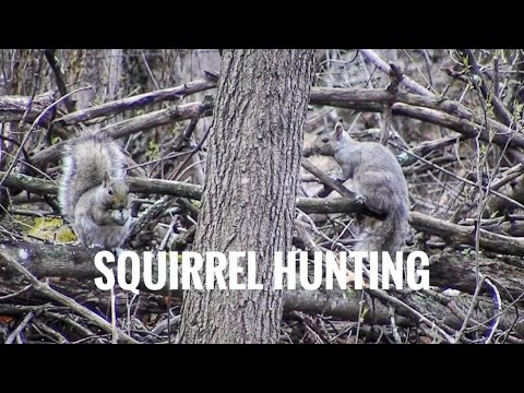 Squirrel Hunting - MN Opener 2019