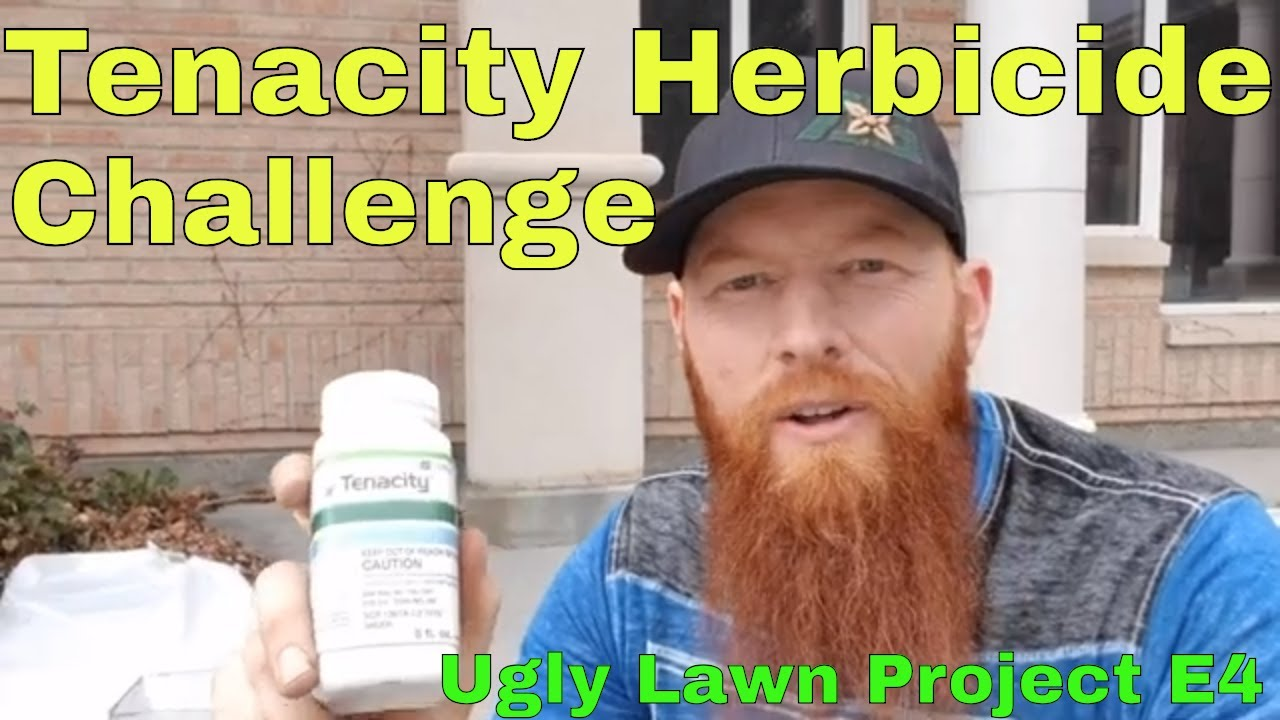 How to fix an Ugly Lawn, Tenacity herbicide challenge  diy tenacity pre  emergent