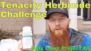How to fix an Ugly Lawn, Tenacity herbicide challenge.  diy tenacity pre emergent