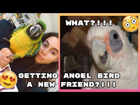 GETTING MY BIRD  A NEW FRIEND?!!! + UNBOXING!!! // ASIA MONET VLOGS
