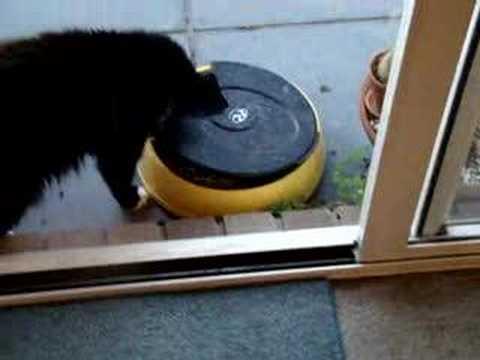 Timed Portion Controlled Pet Feeder Super Feeder 174 Inf