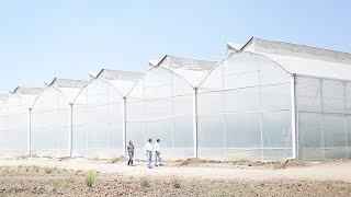 Greenhouse covering materials