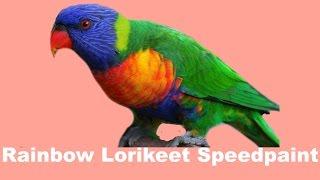 【Speedpaint】 Rainbow Lorikeet
