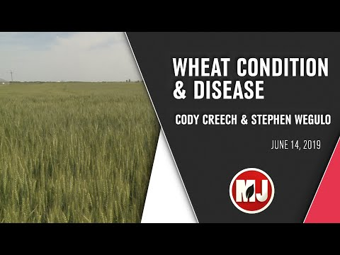 Wheat Condition and Disease | June 14, 2019