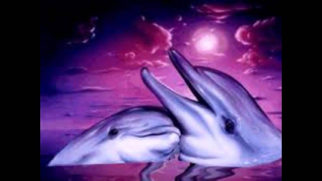 Delfines De Amor Youtube