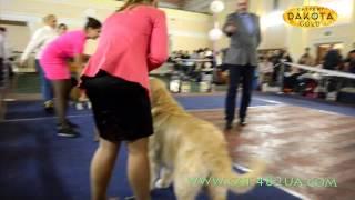 Выставка собак, Харьков, 30 октября 2016, видео 8