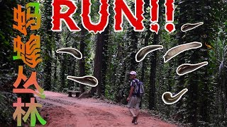 【斯里兰卡vlog】50-安静得可怕的蚂蝗公园