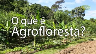 O que é Agrofloresta?