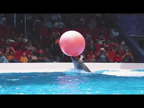 Best of Dubai Dolphin Show at Dubai Dolphinarium