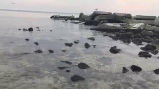 видео Парк отдыха «Отрада»