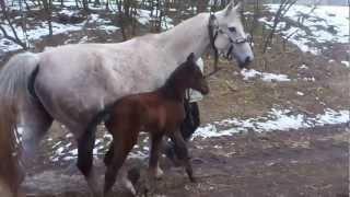 Pierwsze konie, które opuściły obóz karny dla zwierząt w Cielętniku